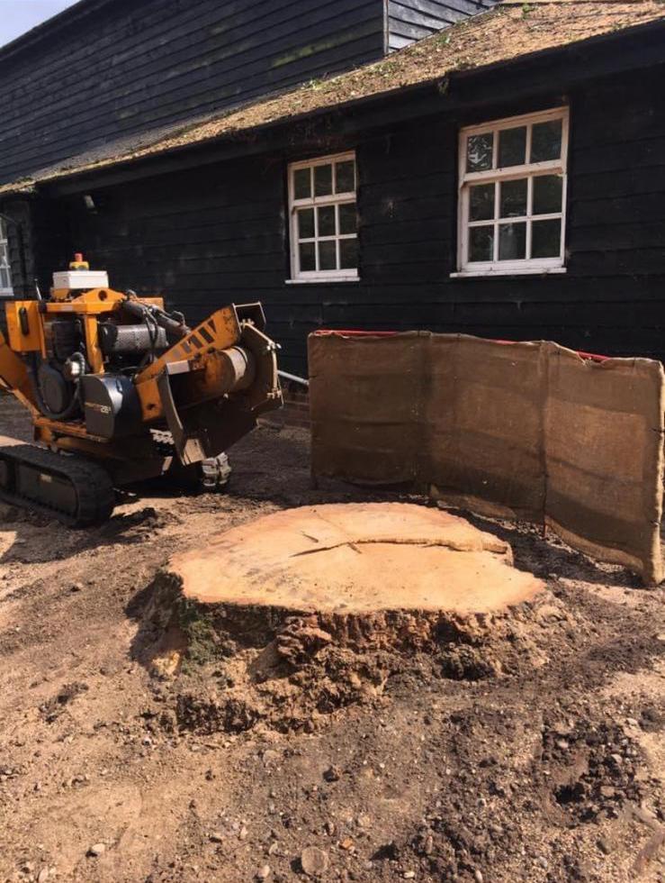 Stump Removal Harlow