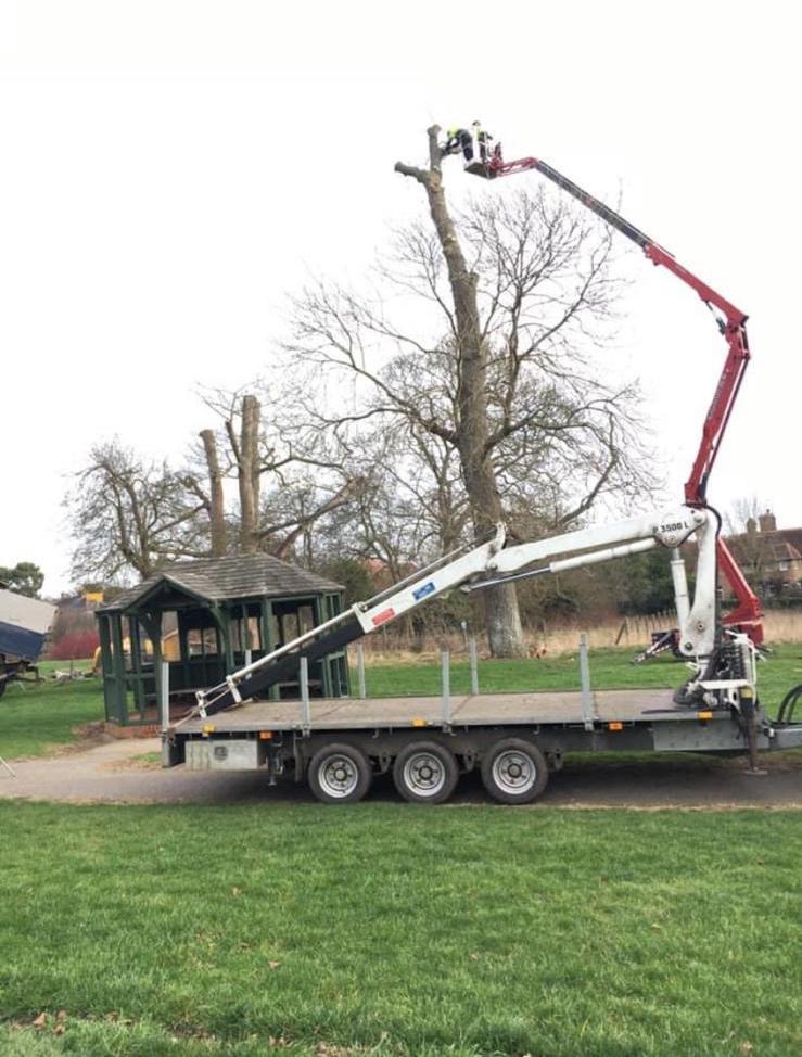 Tree Services Hertfordshire