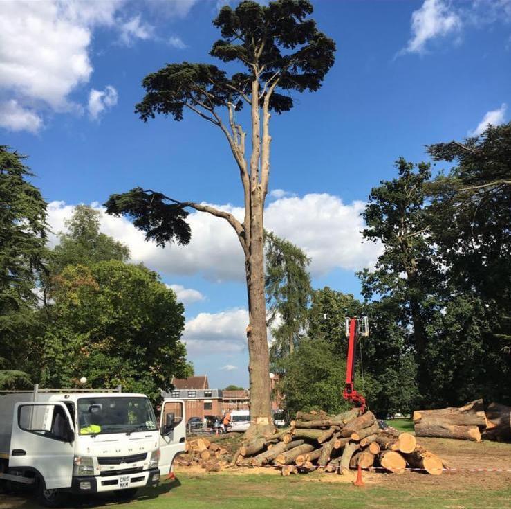 Tree Surgeons Harlow