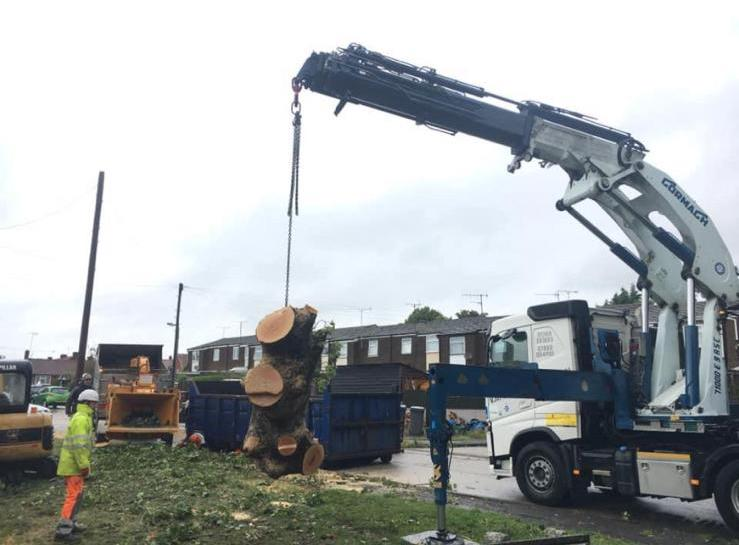 Tree Services Essex