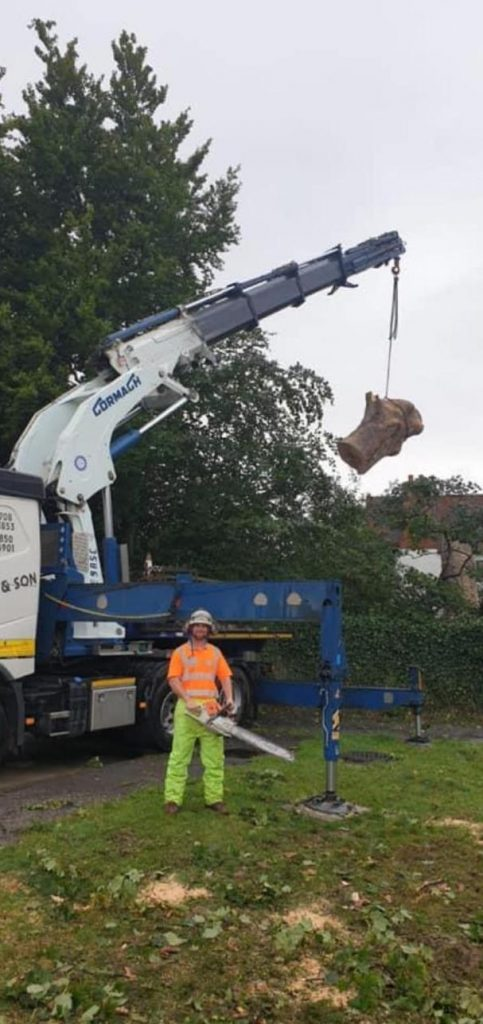Tree Services Harlow